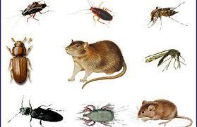 شركات مكافحة الحشرات بجدة