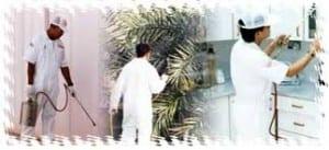 شركة رش مبيدات بالجموم
