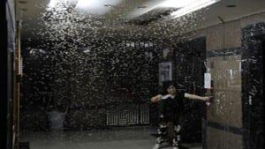 النمل الابيض الطائر بجدة