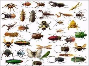 حشرات المنزل بالصور بجدة