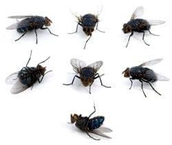 حشرات المنزل الطائرة بجدة