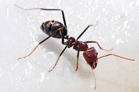 مكافحة النمل في المنزل بجدة